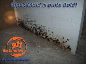 911 Restoration- mold removal -Carlisle PA -black mold
